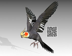 3D model Cockatiel