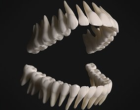 Photorealistic human teeth 3D asset