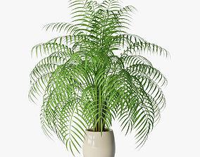 3D model Palm 05