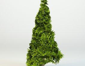 Cartoon tree 3D asset rigged