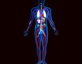 Human Circulatory System 3D