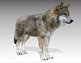 3D model animated low-poly Gray wolf