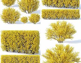 Forsythia 7 bushes plus 2 hedges collection 3D
