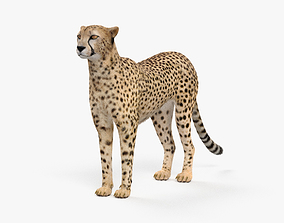 3D model Cheetah HD
