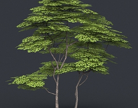 Low Poly Tree 14 3D asset