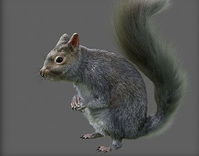 3D animated terrarium squirrel