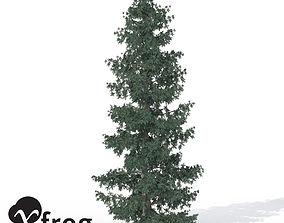 3D XfrogPlants Engelmann White Spruce