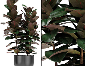Plant in Pot Flowerpot Exotic Plant plants 3D model