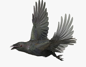 3D model CROW - CORVUS - rigged - animated - Standard - 2
