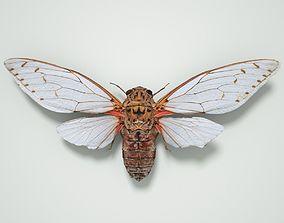 Cicada Pomponia Imperatoria Malaysia Insect 3D asset