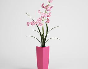3D model CGAxis flower