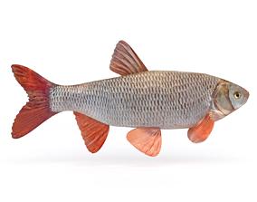 3D model Freshwater Fish animal