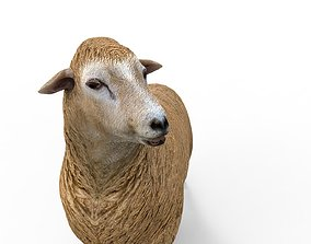 Low poly 3D Sheep Rigged rigged