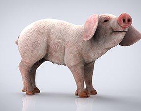 3D model REALISTIC PIG