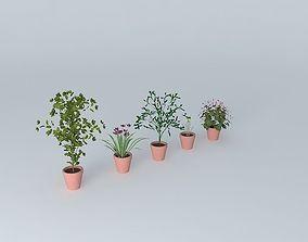 pot 3D model flowers