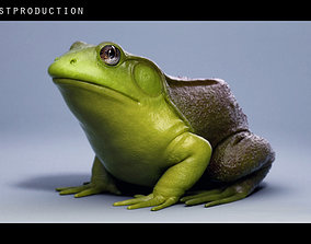tropical 3D model American Bullfrog frog