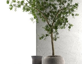 3D Outdoor Pots with Olive Tree concrete