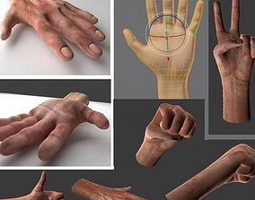 3D asset animated Rigged Hands