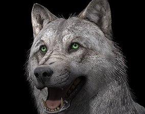 3D model wolf wild dog husky rigged-animated