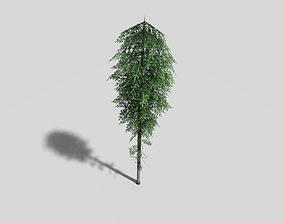 3D model low poly spruce