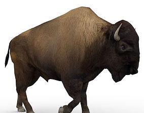 3D model American Buffalo Animated