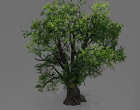broadleaf Game Model - Forest - Tree 04 3D