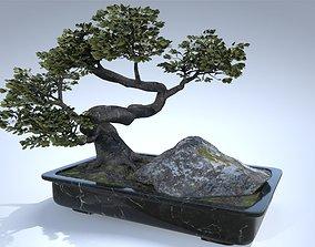 Japan Bonsai Tree 3D model