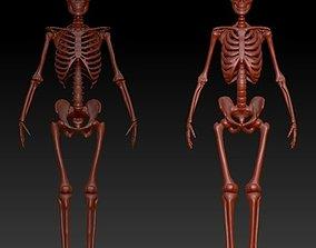 3D print model Skeleton