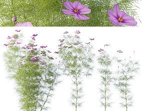 Cosmos flower 3D model PBR