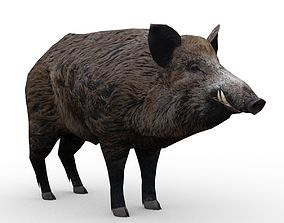3D asset Wild boar Animated