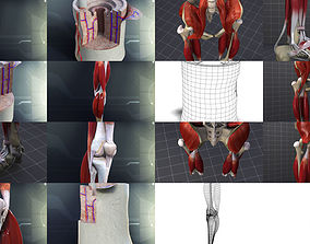 Lower Skeletal System 3D