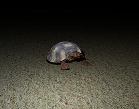 turtle 3D model reptile