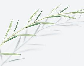 Olive branch 3D