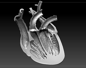 3D print model Heart Sliced STL
