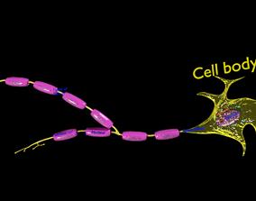 Neuron axon parts labelled detail 3D model