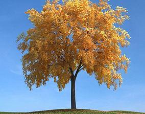 3D Large Fall Tree