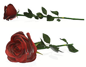 Single beautiful red rose on ground 3D model