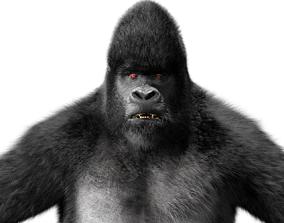 Silverback Mountain Gorilla Rigged Hair fur 3D model