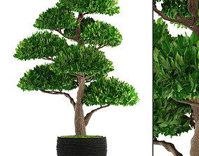 3D model house Bonsai tree