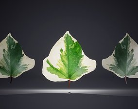 Leaf Pack-26 Leaves 3D model low-poly