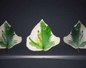 Leaf Pack-26 Leaves 3D model low-poly