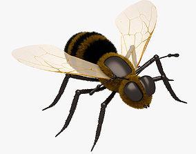 Honey Bee Close 3D asset