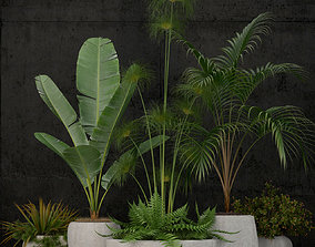 3D model Plants collection 80