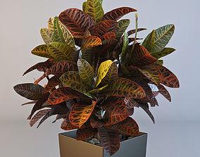 3D Croton plant