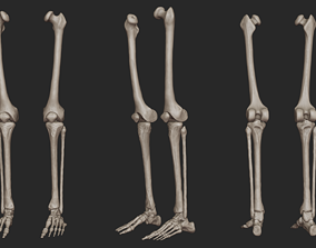 Human Skeletal Leg High Poly 3D