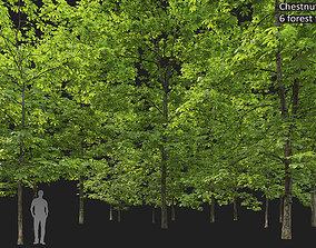Chestnut-tree 05 H8-17m 3D