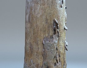 scan - Tree log 02 3D