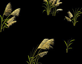 Plant - Reed 669 3D