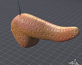 3D model Pancreas External