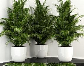 Plants collection 107 3D model